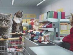 Веселая реклама, в которой все роли сыграли кошки
