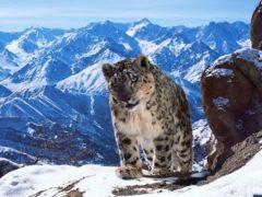 Захватывающий трейлер самого дорогого фильма о дикой природе!