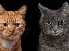 Удивительные портреты котов, подчеркивающие их характер (20 фото)