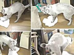 Котик моет тряпкой пол и при этом очень ругает своих нечистоплотных хозяев