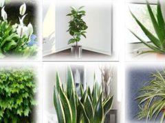 Живые кислородные бомбы: 6 растений, для которых стоит найти место в каждом доме