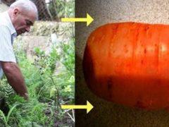 Мужчина потерял жену, но выкапывая на огороде обычную морковь он нашел ее кольцо