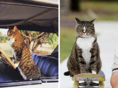Водит машину и катается на скейте, на сегодняшний день Диджа самый умный кот в мире