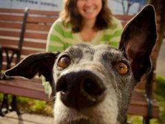70 фотодоказательств того, как собаки любят камеру и испортить чью-то фотоссесию