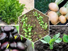 Какие овощи и зелень можно сажать на даче в апреле?