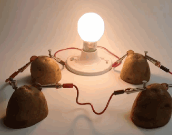 potato powered light bulb