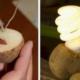Картофель поможет сэкономить деньги и освещать комнату в течение месяца