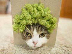 Самый популярный котик интернета удивил всех новой фотосессией в париках