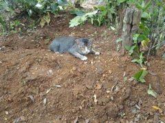 Больше года убитая горем кошка ежедневно возвращается на могилу к умершему хозяину