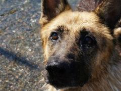 Обычный пес, который показал всем, что такое настоящая любовь и преданность