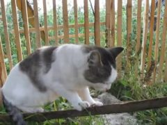 """Хозяйка ругает котика, а он с виноватым видом отвечает ей – """"Не знаю"""""""