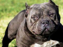 Запрещенные породы собак, которые могут причинить серьезный вред окружающим