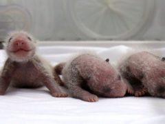 Самые трогательные фото только родившихся животных, которые вы вряд ли раньше могли видеть