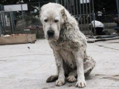 История подлости и жертвенности обычного непримечательного пса