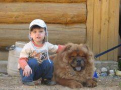 Врач-невропатолог посоветовала семье с больным ребенком завести собаку Чау-чау