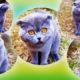 Это видео набрало невиданное количество просмотров: кот злобно ругает хозяйку за все провинности