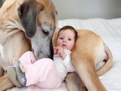 Собака двое суток согревала брошенного на морозе ребенка, а после исчезла