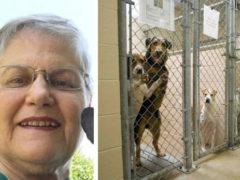 Одинокая женщина пришла в приют, попросила дать ей самую ненужную собаку и она ее получила