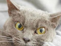 Этот котик из приюта уже больше года грустит в одиночестве. Никто не хочет его забирать по одной простой причине