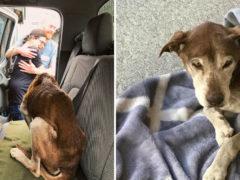 В США потерявшаяся в горах собака шесть недель лежала на скалах, скулила и ждала помощи
