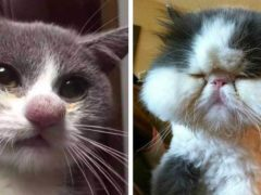 Эти 30 милых котиков пытались подружиться с пчелами, а после очень об этом пожалели