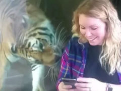 Неожиданная реакция дикого животного на беременную девушку поразила пользователей интернета