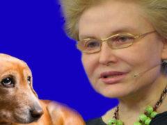 Возмущенные зрители просят наказать Елену Малышеву из-за призыва уничтожать бродячих животных