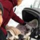 Семейная идиллия на лоне природы: Сергей Безруков показал трогательные кадры с новорожденным сыном