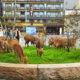 Пока человечество сидит по домам, опасаясь заражения коронавирусом, дикие животные возвращают себе территории больших городов
